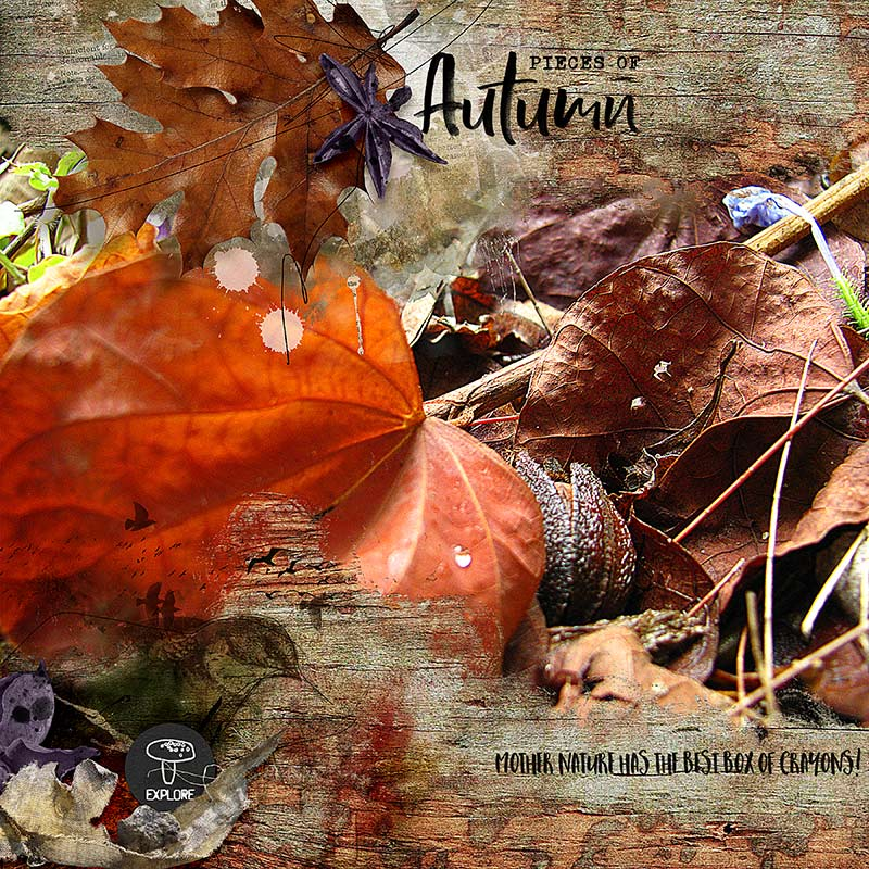 12X12-AUTUMN-LEAVES---PIECES-OF-AUTUMN-800.jpg