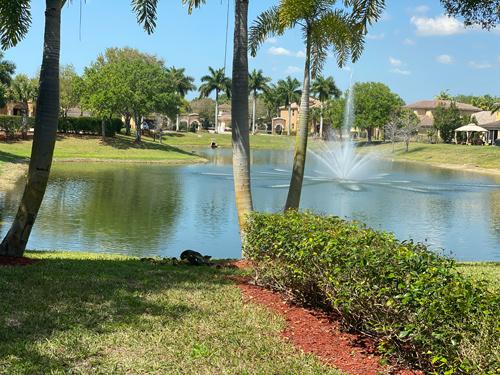 backyard-pond.jpg