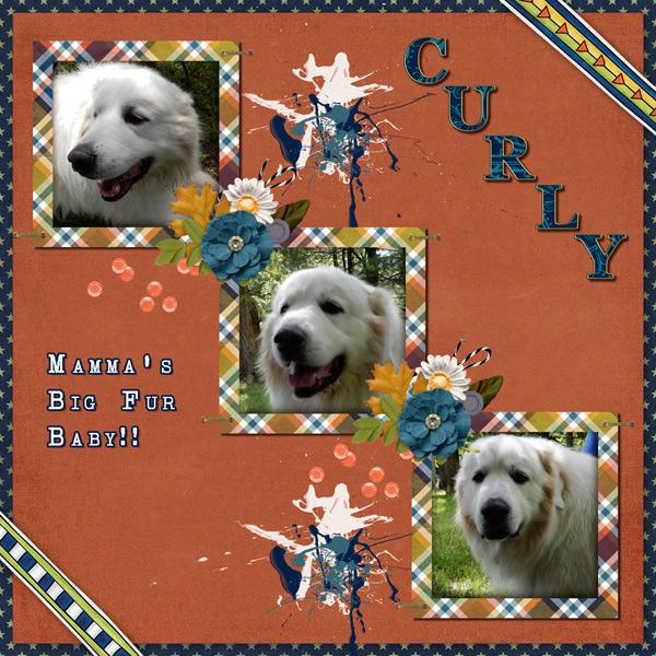 Curly-boy.jpg