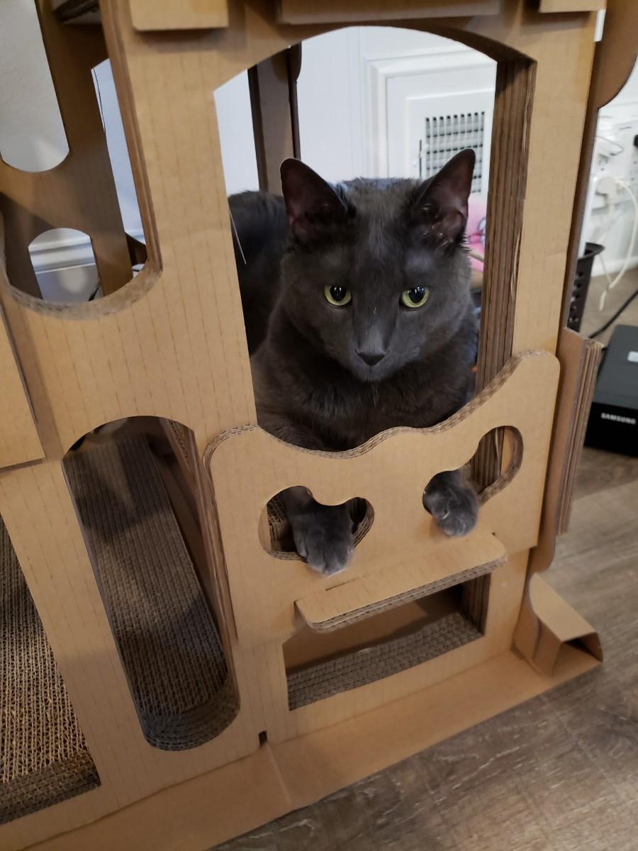George cat tower Wayfair.jpg