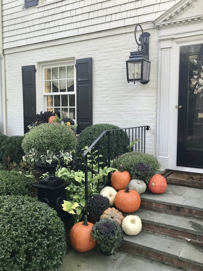 pretty-pink-tulips-pumpkins-front-porch-white-house-black-shutters-boxwood.jpg