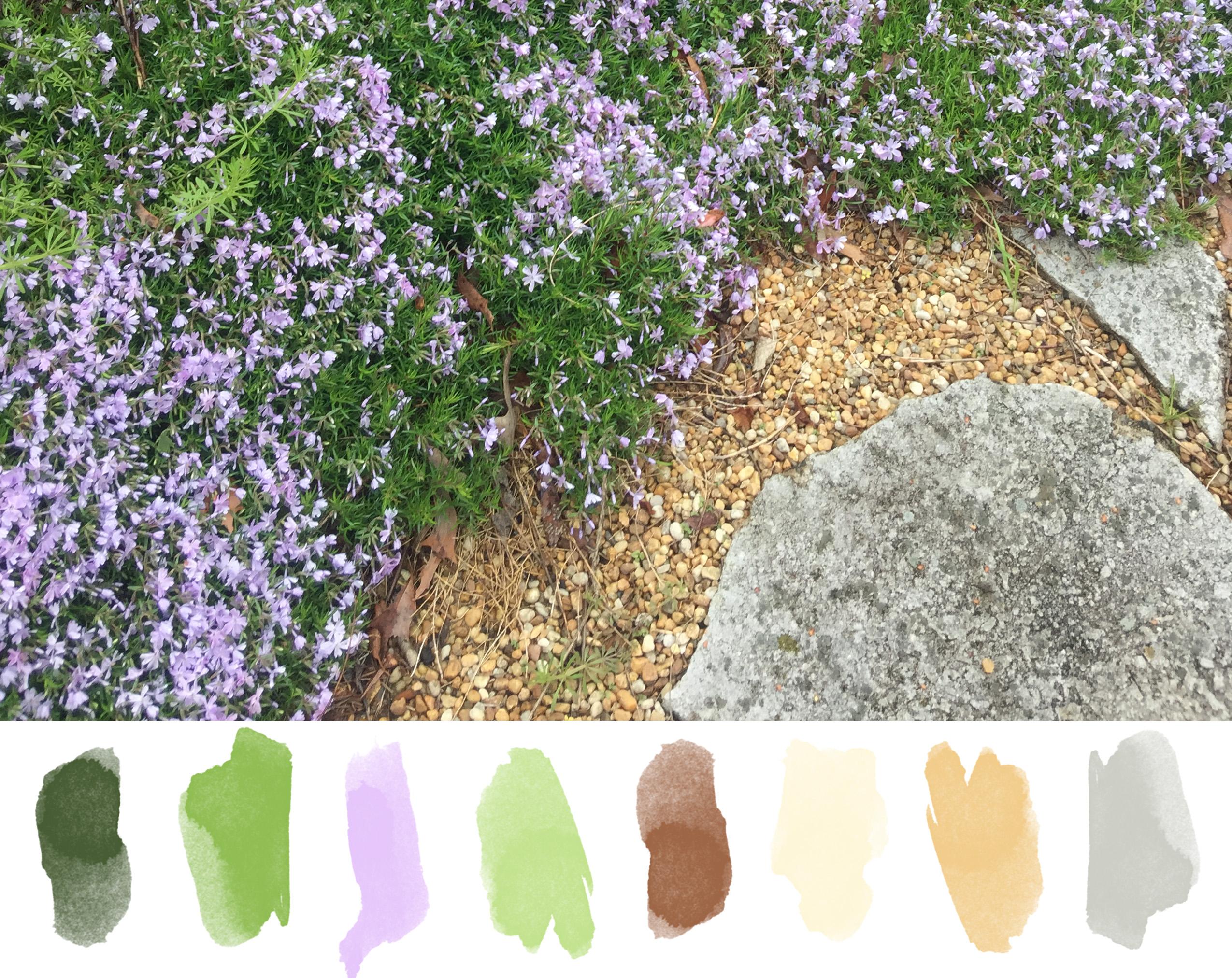 Spring Phlox.jpg
