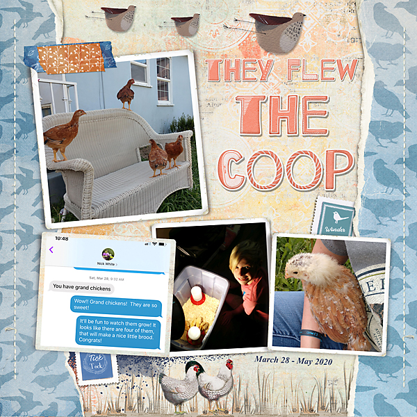 They-Flew-The-Coop.jpg