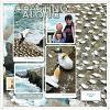Gannets by Lynn Grieveson