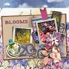Blooms by wvsandy