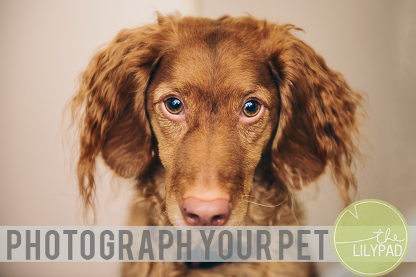 Photograph Your Pet