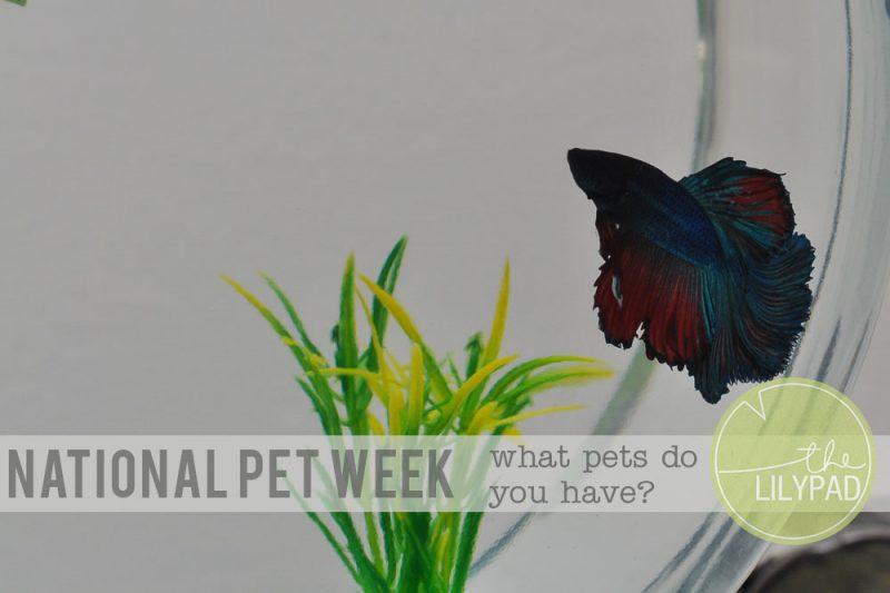 It's National Pet Week!!!