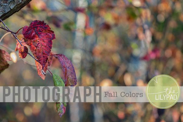 Photograph Fall Colors